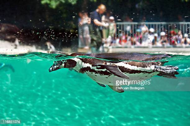 freestyle swimming - zoo stock pictures, royalty-free photos & images