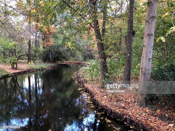 frehwater stream running through middle tiergarten