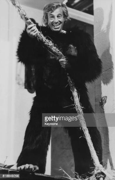 French actor JeanPaul Belmondo wearing a gorilla costume for the film 'L'Animal' 1977