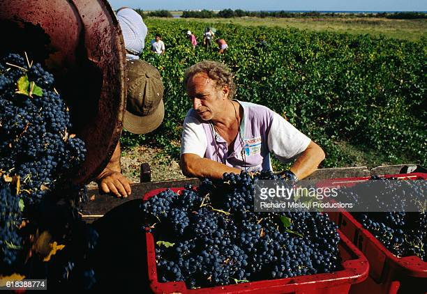French Actor Pierre Richard at His Vineyard