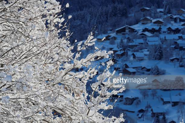 French Alps Snow covered tree in winter SaintGervais France