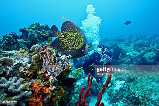 a french angelfish meets a scuba diver - quintana roo stock pictures, royalty-free photos & images