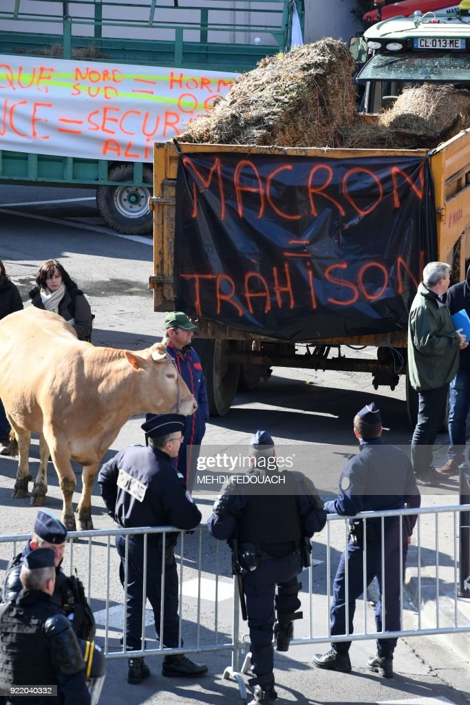 French anti-riot policemen stand guard as a French farmer block the traffic with trucks and livestock during a rally, in Bordeaux, on February 21, 2018 to protest against the negotiations between the Mercosur and the European Union on the new map of disadvantaged areas. /
