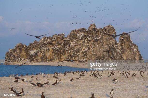 French Atoll Of Clipperton In The Pacific Avril 1986 L'île de Clipperton petit atoll français découvert en 1711 Colonie d'oiseaux