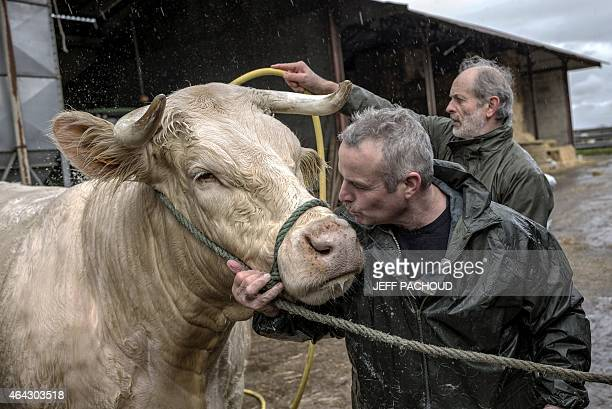 """French breeder Serge Vincent kisses his Charolais cow named """"Deesse"""", on February 23, 2015 in Oudry. The cow and her veal """"Lucy"""" will compete in the..."""