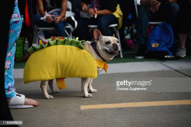 French bulldog dressed as a taco is seen at the Haute Dog Howl'oween Parade at Marina Vista Park on October 27 2019 in Long Beach California
