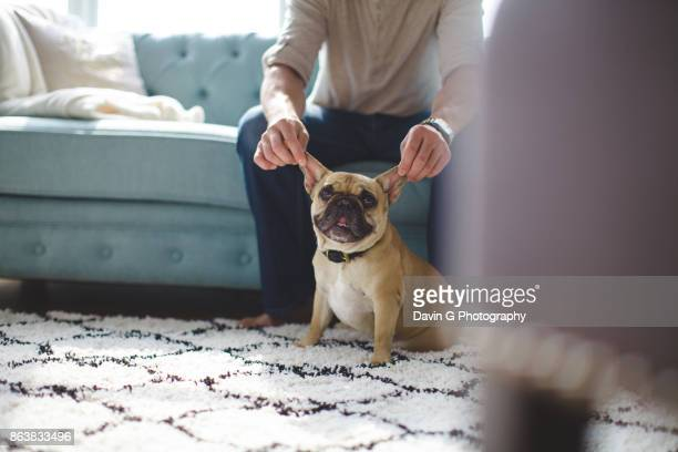 french bulldog ears - image stock pictures, royalty-free photos & images