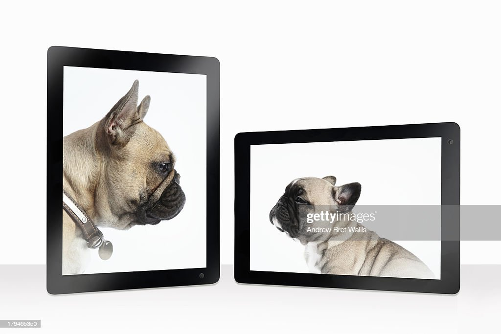 French bulldog mother and pup greet on-line : Stock Photo