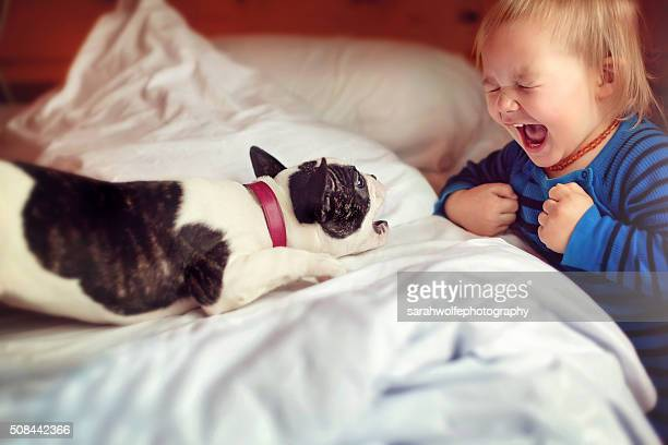 french bulldog puppy and little boy playing in bedroom together - savage dog stock pictures, royalty-free photos & images