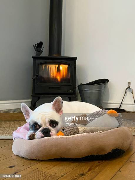 french bulldog sitting in dog bed by open fire stove inside a barn conversion house - warming up stock pictures, royalty-free photos & images