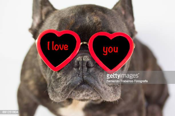 French bulldog sitting with glasses of red heart love you in Valentine´s Day