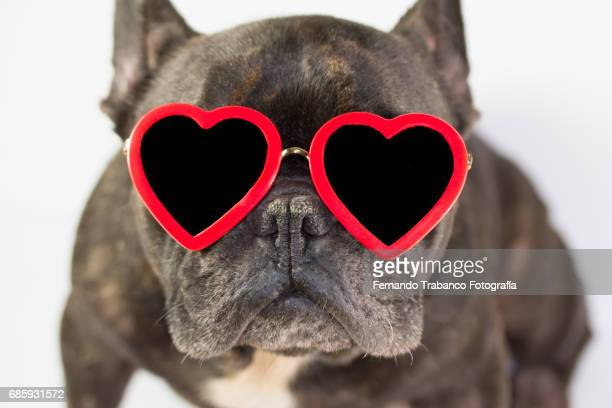 french bulldog sitting with glasses of red heart,white background. - love is blind stock pictures, royalty-free photos & images