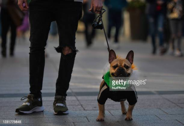 French Bulldog wearing a festive outfit on St Patrick's Day in Dublin's Grafton Street On Wednesday, 17 March 2021, in Dublin, Ireland.