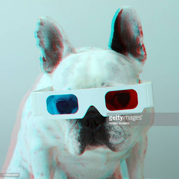 french bulldog with 3d glasses - stereoscopic images stock photos and pictures