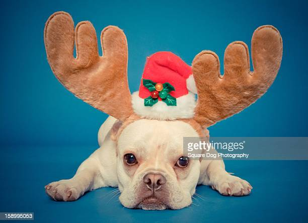 french bulldog with antlers