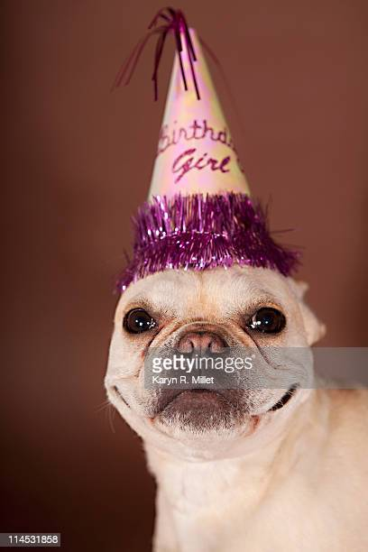 French Bulldog with Birthday Hat