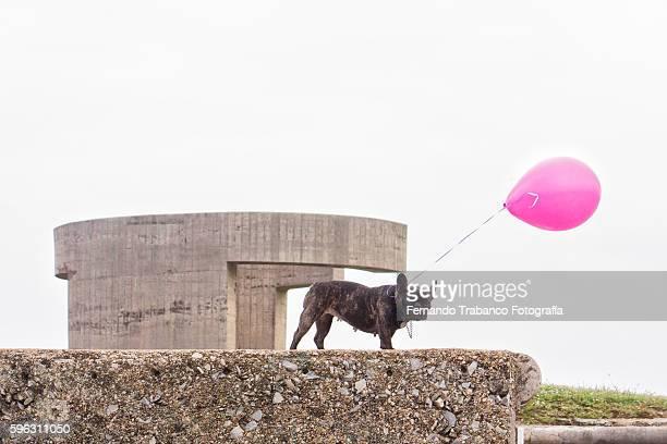french bulldog with pink helium ballon in public park near the Elogio del Horizonte, sculpture