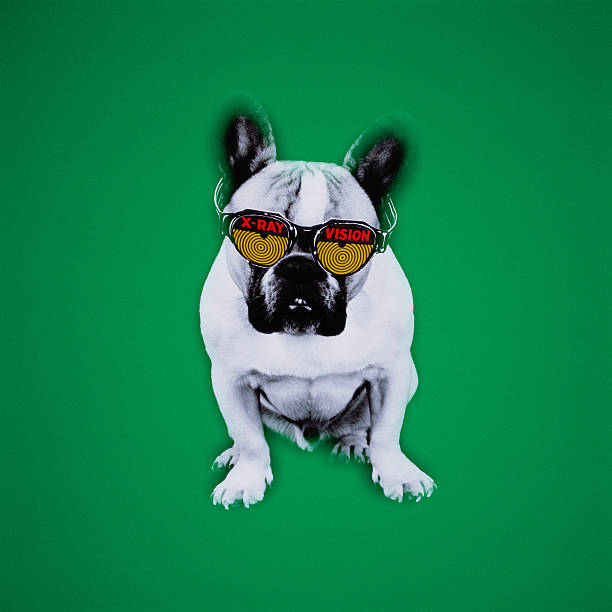 French bulldog with x-ray vision glasses