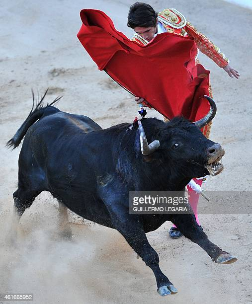 French bullfighter Sebastian Castella performs during a bullfight at Cesar Rincon bullring in Duitama department of Boyaca Colombia on January 11...