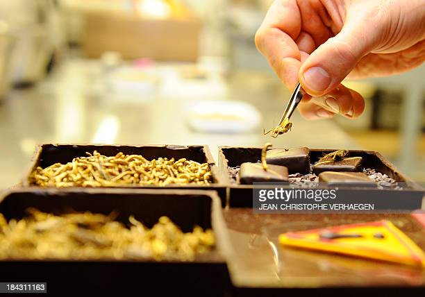 French chocolate maker Sylvain Musquar places insects on top of his chocolates on October 12 2013 in his chocolaterie in VillerslesNancy northeastern...