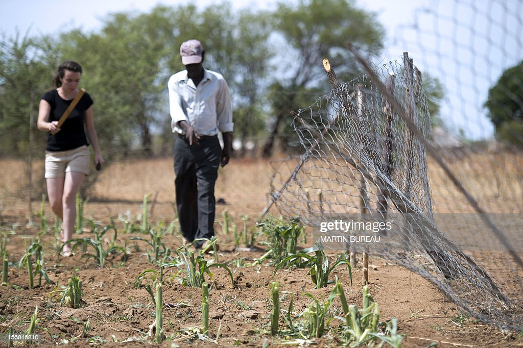 French CNRS researcher Chloe Guerbois (L) talks to Victor Bitu (R), the owner of a field destroyed by elephants, on November 19, 2012 in the village of Magoli, at the border of Hwange National Park in Zimbabwe.