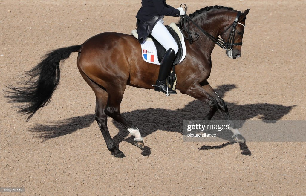 French dressage rider Ludovic Henry on the horse After You