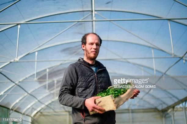 French Farmer Gwenael Le Floc'h poses while holding a crate full of lettuce crops inside one of his greenhouses in MauredeBretagne western France on...