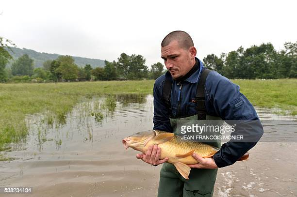 French farmer Sebastien Thenard fishes a carp in order to release it in the Seine after it was trapped in his field because of the Seine's flood on...