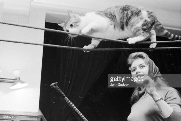 French film actress Brigitte Bardot coaxes a cat along a tightrope