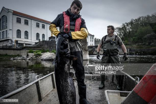 French fisherman poses with a sheatfish on his boat on the Dordogne river near Mauzac-et-Grand-Castang on April 20, 2021. - In Dordogne, targeted...