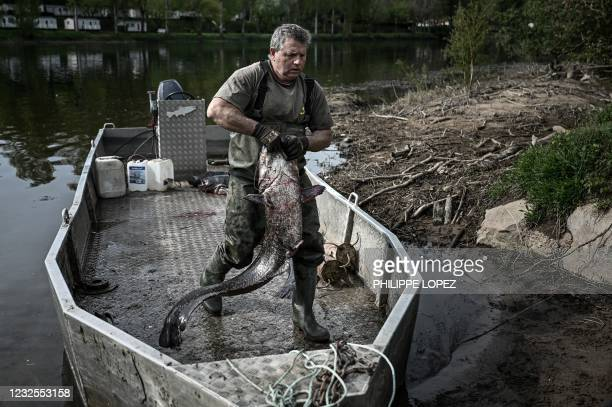 French fishermen unloads a sheatfish from his boat on the Dordogne river near Mauzac-et-Grand-Castang on April 20, 2021. - In Dordogne, targeted...