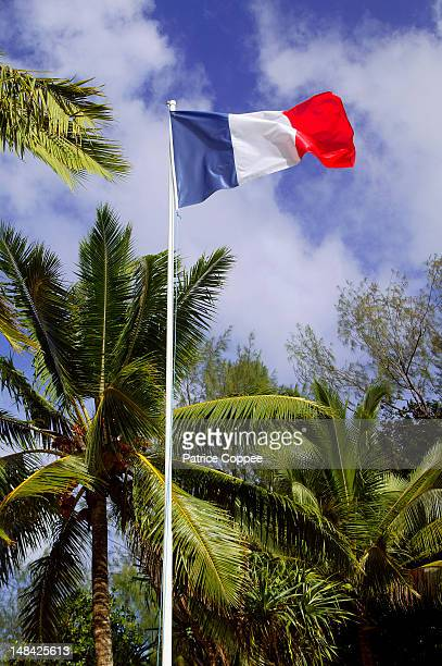 french flag under the coconut trees - フランス海外領 ストックフォトと画像