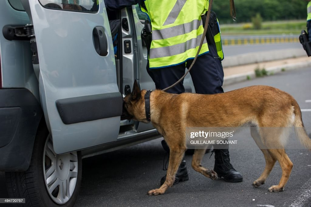 French gendarmes use a police dog to search for traces of narcotics and drugs during a police check, on the A10 motorway in Monnaie, near Tours, central France, on May 30, 2014.