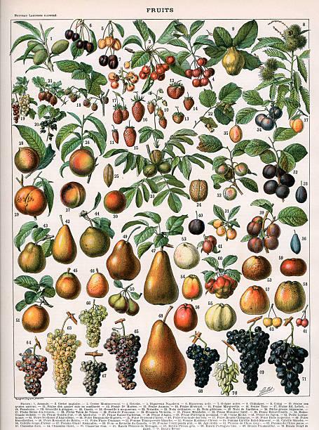 Varieties Of Fruit