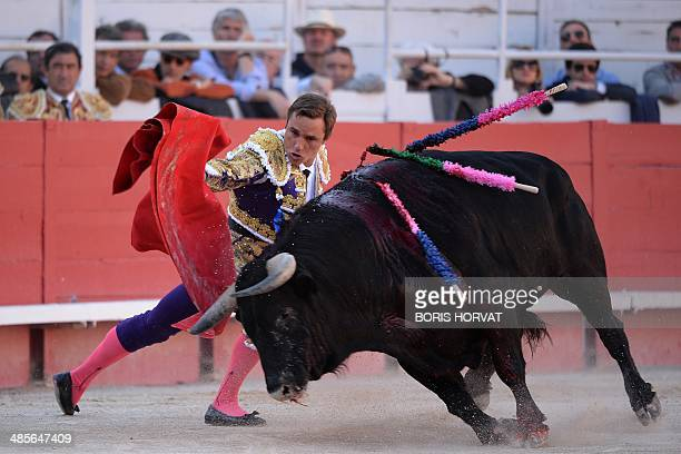 French Matador Juan Bautista performs a pass on a Domingo Hernandez bull during the spring feria on April 19 2014 in Arles southern France AFP PHOTO...