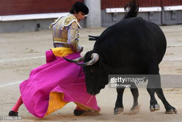 French matador Sebastian Castella is seen performing with a Jandilla ranch fighting bull during a bullfight at the Las Ventas bullring in the 2019...