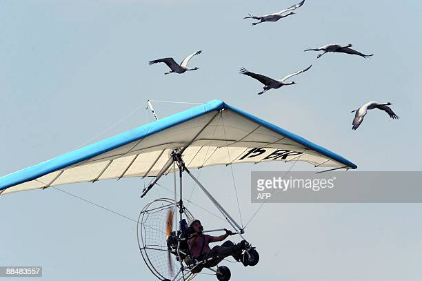 French microlight pilot Christian Moullec flies accompanied by flock of cranes during the WAG 2009 in Turin on June 14 2009 AFP PHOTO / GIUSEPPE...