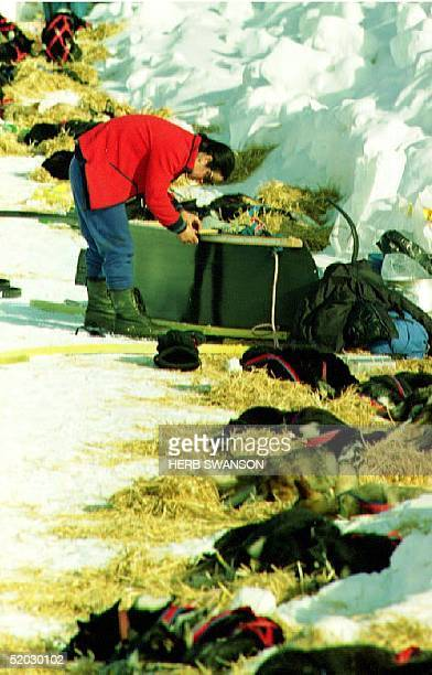 NIKOLAI AK MARCH 10 French musher Claire Phillip repairs her sled while resting her dogs 09 March 1993 during the fourth day of the Iditarod Sled Dog...