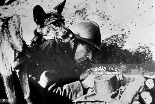 French officer writing a message while a dog stands by ready to deliver it The dogs acted as couriers to scattered posts in the French zone