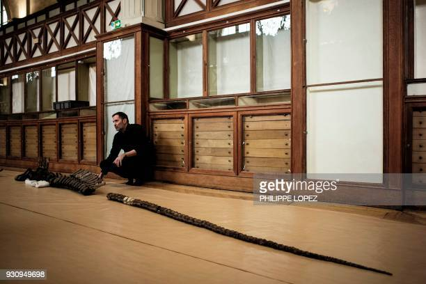 French paleontologist Ronan Allain stands by the skeleton of an edmontosaurus regalis a species of combcrested hadrosaurid dinosaur being assembled...
