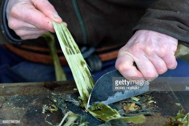 French papermaker Benoit Dudognon cleans the bark of a mulberry tree in order to extract fibers to make a Washi, a japanese paper, on January 25,...