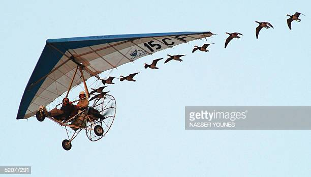 French pilot Christian Moullec performs with his trained swans during the 21st Federation Aeronautique Internationale World Grand Prix in the Emirati...