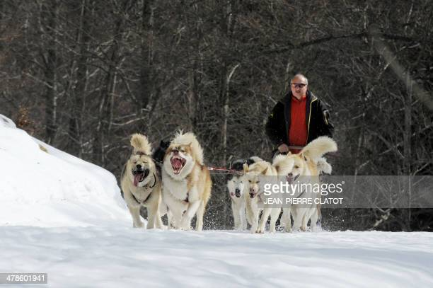 French policeman and musher Daniel Chomette trains with his dogs on March 11 2014 at the Aezelier pass in ChateauBernard southeastern France Chomette...