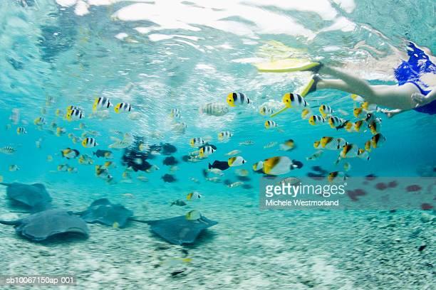 French Polynesia, Bora Bora, Woman snorkelling in sea, low section