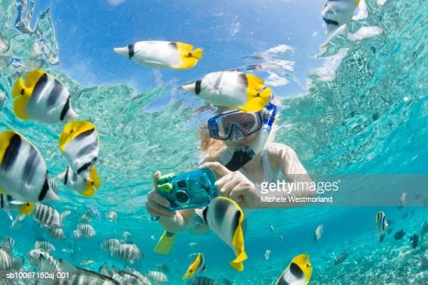 french polynesia, bora bora, woman taking underwater pictures of colorful reef fish - ボラボラ島 ストックフォトと画像