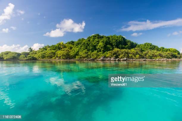 french polynesia, tuamotus, tikehau, view to bird island - 生い茂る ストックフォトと画像
