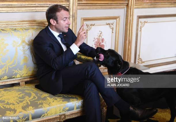 TOPSHOT French president Emmanuel Macron gestures towards his dog Nemo during a meeting with German Vice Chancellor and German Foreign Minister at...