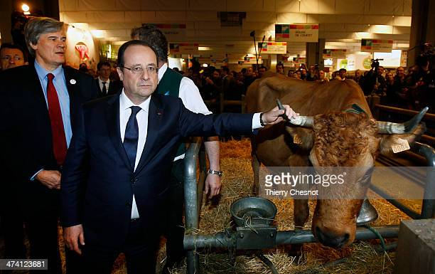 French President Francois Hollande with French Agriculture Minister Stephane Le Foll holds the horn of a cow named 'Bella 7 hold' during a visit of...