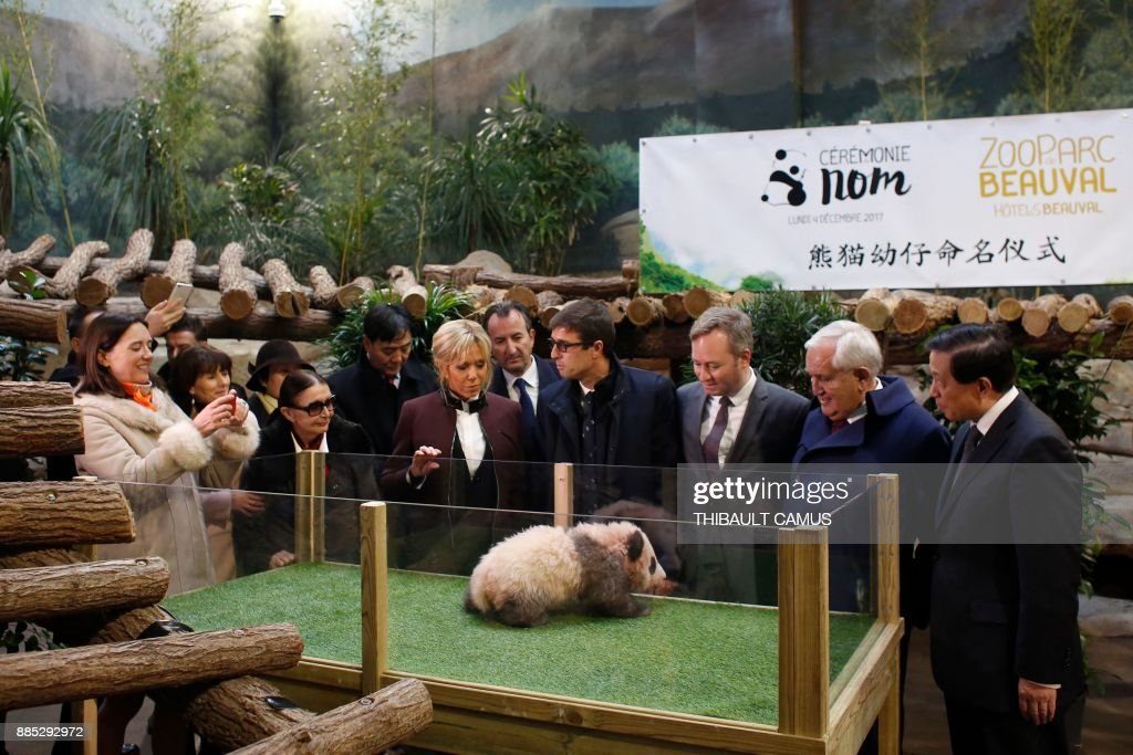 French president's wife Brigitte Macron (5thR), Chinese Vice Foreign minister Zhang Yesui (R), former French prime minister, Jean-Pierre Raffarin (2ndR), French Junior Minister for Foreign Affairs, Jean-Baptiste Lemoyne (3rdR), Director of the Beauval Zoo, Rodolphe Delord (4thR), and Beauval Zoo founder Francoise Delord (3rd-L) attend a naming ceremony for a panda born at the Beauval zoo, on December 4, 2017 in Saint-Aignan-sur-Cher. The 4-month-old cub was called Yuan Meng, which means 'Fulfillment of a dream'. / AFP PHOTO / POOL / Thibault Camus