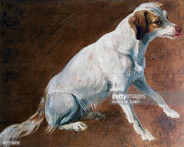 French Spaniel ancestor by AlexandreFrancois Desportes France 18th century Paris Musée De La Chasse Et De La Nature